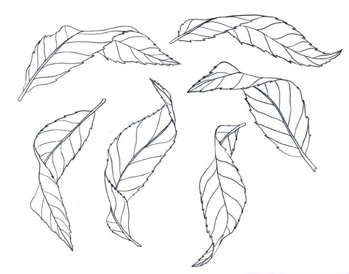 6 Turning Leaves